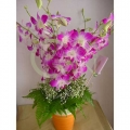 MF1142-Orchid in pot