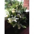 QF0871-lilies vase arrangement